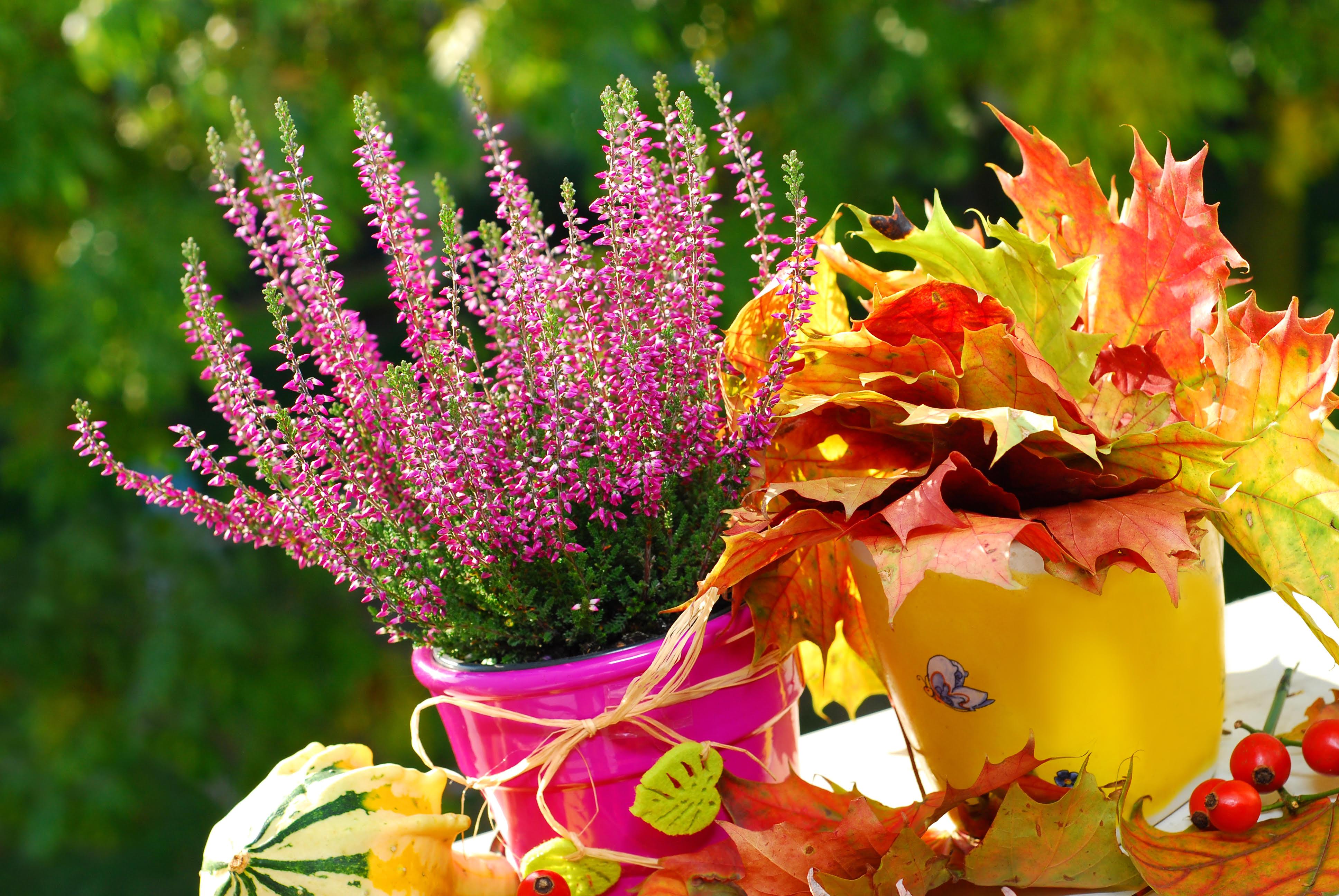 Piante e fiori autunnali per il balcone