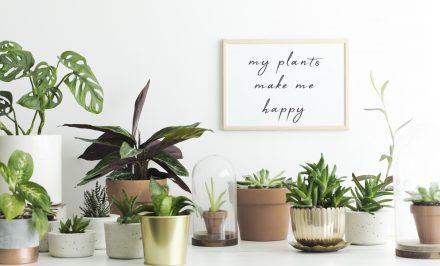 Piante da appartamento, quali scegliere e come curarle