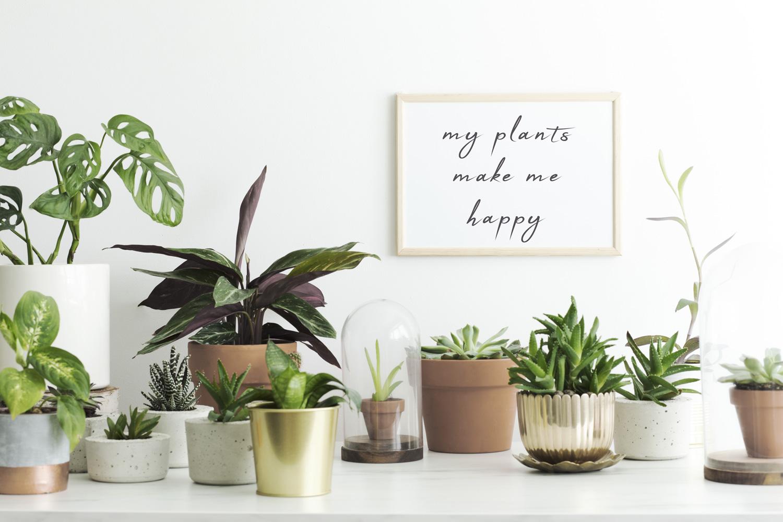 Tronchetto Della Felicità Da Esterno piante da appartamento: quali scegliere e come curarle