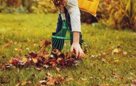 Come pulire le foglie dal giardino